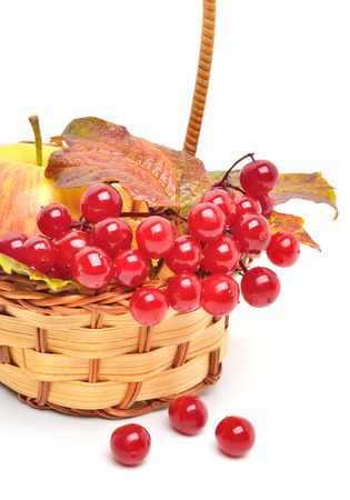 Red viburnum berries and ripe apple in the wicker basket photo
