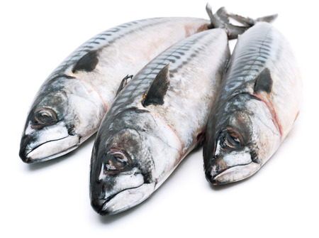Fresh mackerel fishes isolated on white Stok Fotoğraf