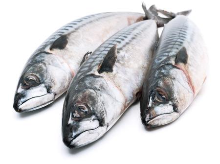 Fresh mackerel fishes isolated on white Standard-Bild