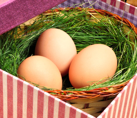 Green nest with eggs in the gift box photo