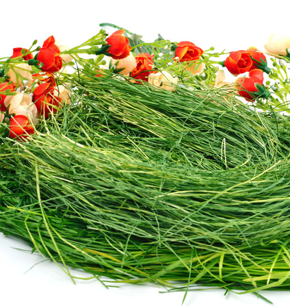 green grass nest isolated on white photo