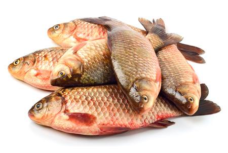 karausche: Karausche Fische isoliert auf wei�em Hintergrund