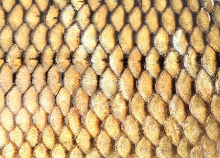 escamas de peces: Pez dorado escalas fondo