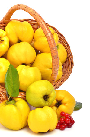 Ripe quinces in the basket isolated on white photo