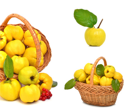 Ripe quince in the basket isolated on white. Collage photo