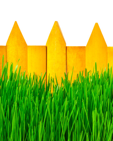 grass isolated: Wooden fence and green grass isolated on white
