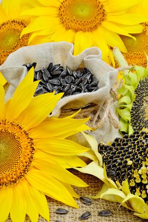 semillas de girasol: Girasoles amarillos brillantes y semillas de girasol en la bolsa Foto de archivo