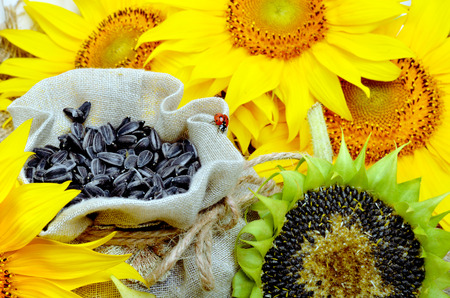 semillas de girasol: Girasoles y semillas de girasol en la bolsa Foto de archivo
