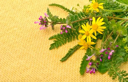 milfoil: Beautiful wildflowers, chamomiles, milfoil on yellow sacking background Stock Photo
