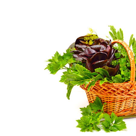 berros: Heap of fresh curly lettuce, water-cress, spinach with parsley in basket isolated on white. Foto de archivo