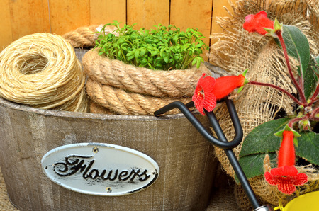 water cress: Spring flowers in wooden bucket with garden tools.