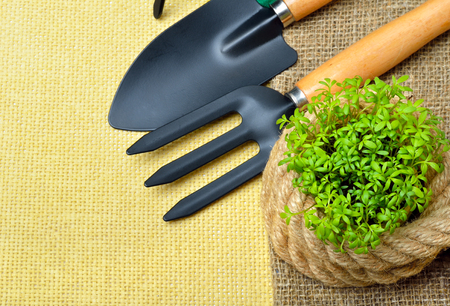 cress: Cress sprouts  with gardening tools on wooden table.
