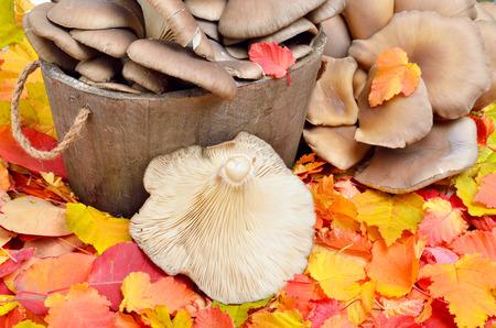 Mushrooms against a background of autumn leaves Standard-Bild