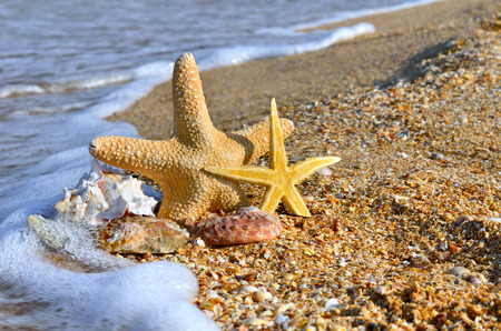 Sea shells and starfish with sand as background.
