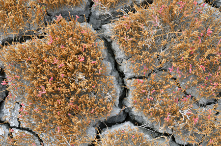 Cracked soil. Dry land without rain.