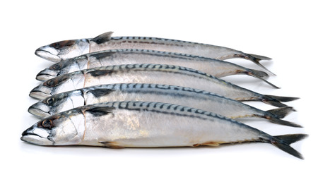 Fresh mackerels isolated on white