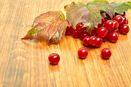 Viburnum berries, guelder rose on wooden background