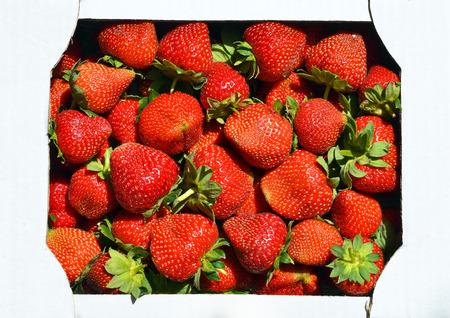 Erdbeeren im Karton. Standard-Bild - 76563662