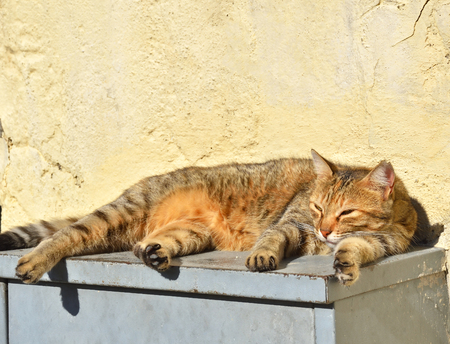 Schlafende streunende Katze auf den Schritten . An einem hellen sonnigen Tag Standard-Bild - 90808666