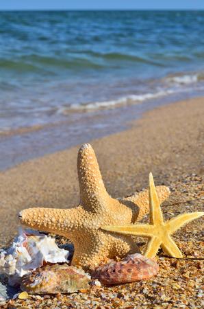 Starfish and seashells on the shore of the ocean. Standard-Bild