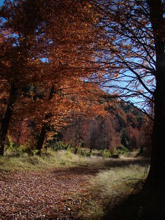 landscape of path with trees in autumn Stock Photo
