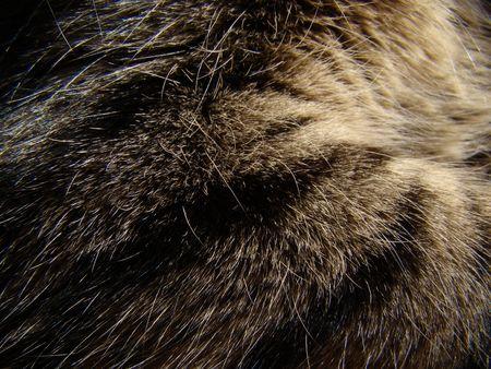 texture feline cat fur Stock Photo