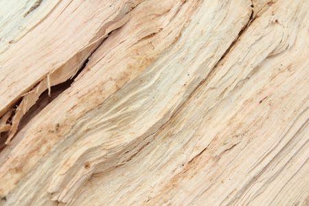 brocken: brocken tree texture