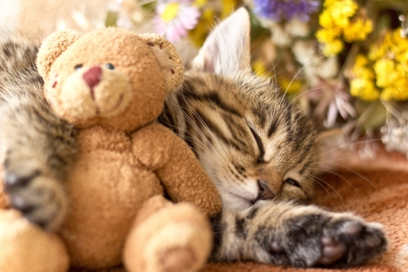 Kitty and teddy bear photo