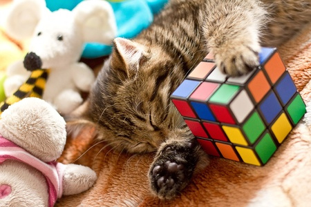 Little cat sleeping  on bed with toys
