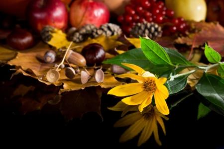Autumn crop isolated on black photo