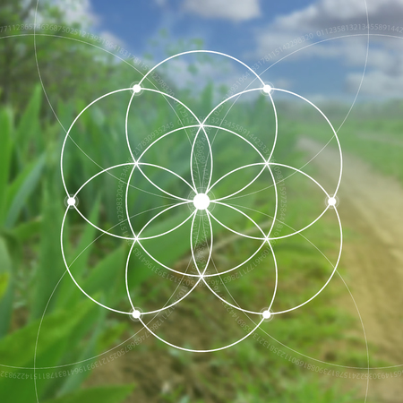 fibonacci number: Flower of life illustration- the interlocking circles ancient symbol. Sacred geometry. Mathematics, nature, and spirituality in nature. Fibonacci row. The formula of nature. Self-knowledge in meditation.