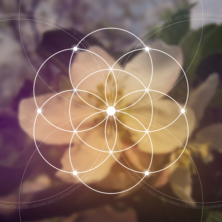 eternity: Flower of life illustration- the interlocking circles ancient symbol. Sacred geometry. Mathematics, nature, and spirituality in nature. Fibonacci row. The formula of nature. Self-knowledge in meditation.