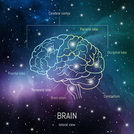 Brain structure. Cerebral cortex, frontal, parietal , occipital and temporal lobes, cerebellum and brain stem scientific medical neuro biology illustration in front of outer space futuritic background