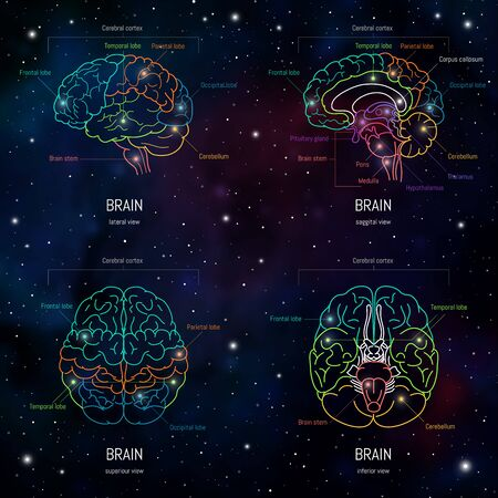 Neuroscience infographic on space background. Human brain lobes and sections illustration. Brain anatomy structure cross section. Neurobiology scientific medical vector in front of futuristic cosmos