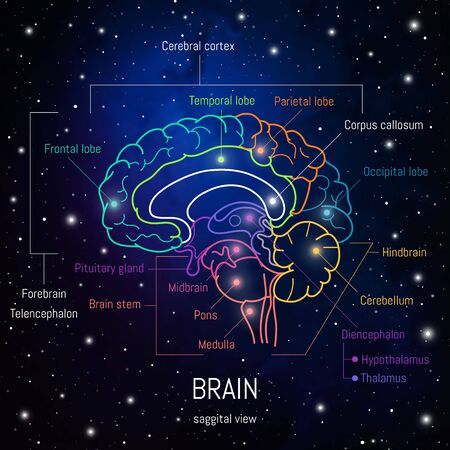 Neuroscience infographic on space background. Human brain lobes and sections illustration. Brain anatomy structure cross section. Neurobiology scientific medical vector in front of futuritic cosmos. Иллюстрация