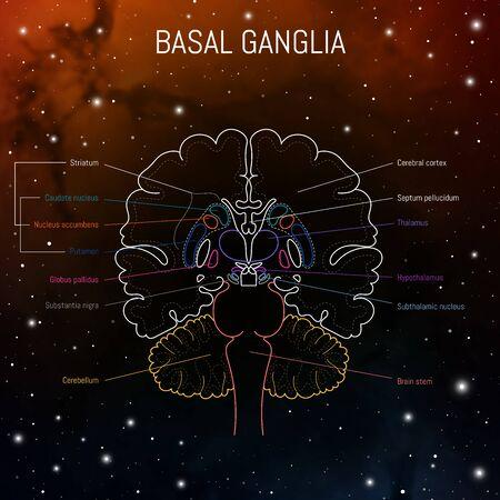 Basal ganglia neuroscience vector infographic. Futuristing illustration of neurobiology scheme of brain.