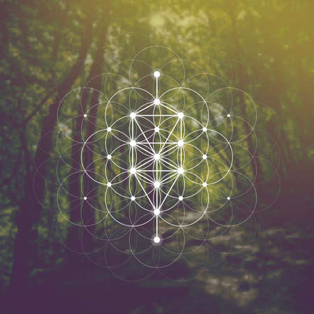Flower of life sacred geometry illustration with intelocking circles and light dots in front of photographic background. Hipster tree of life sci fi art. Ilustración de vector