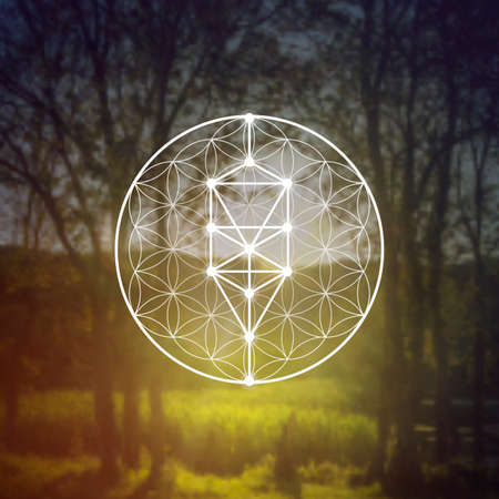Flower of life sacred geometry illustration with intelocking circles and light dots in front of photographic background. Hipster tree of life sci fi art