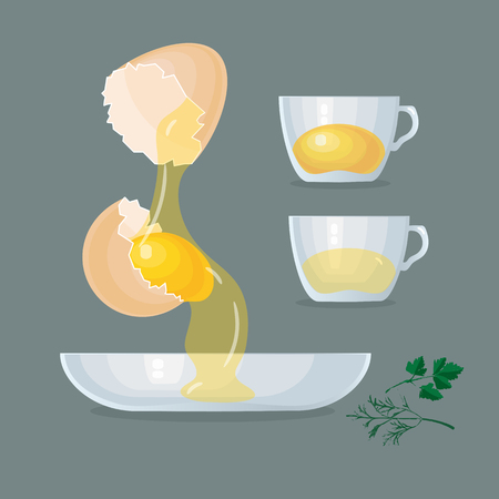 Vector illustration with eggs, yolks, white, eggshells and glass bowl, cups 