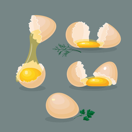 Vector illustrations with isolated eggs, yolks, white, eggshells and greens on grey background.