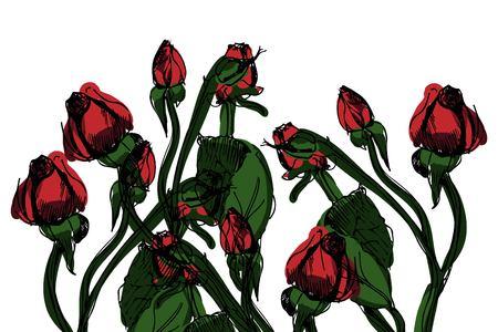 Hand drawn rose vector illustration