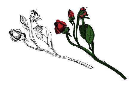 Hand drawn rose vector  illustration. Small roses