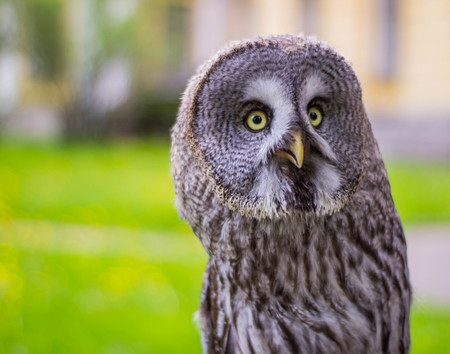 Portrait of owls Stock Photo