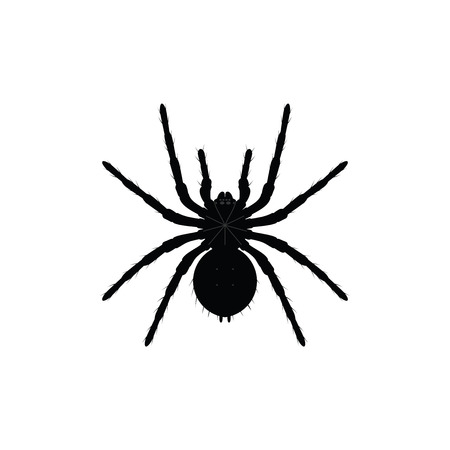 Black spider top view silhouette, closе-up spider, scary big spider isolated on white, poisonous isect , arachnophobia background, spider vector icon.