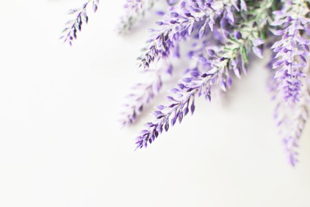 Lavender branch on a white background.