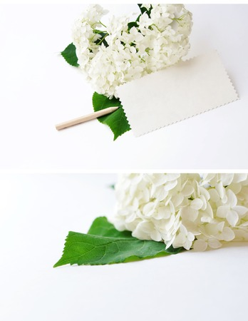 blank note: Hydrangea flower on a white background with a space for text, zigzag paper and pencil
