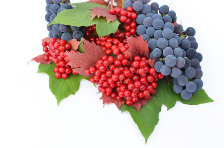 guelderrose: Guelder-rose berries with grapes and grean and red leaves on a white background Stock Photo