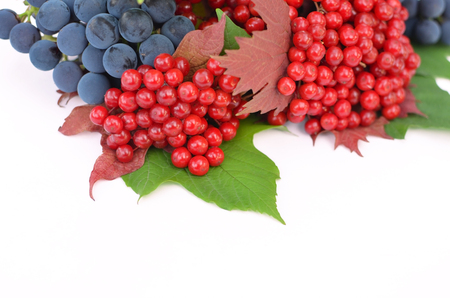 guelderrose: Guelder-rose berries with grapes and green and red leaves on a white background