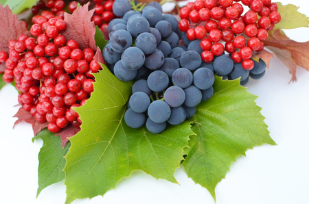guelderrose: Guelder-rose berries with grapes and green leaves on a white background Stock Photo