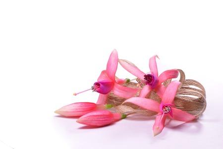 flores fucsia: Composici�n de flores fucsia con los brotes y un arco de lino
